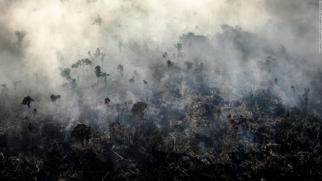 Brazil lost the most primary forest of any country in 2019.