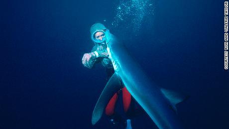 Dia memfilmkan hiu untuk & # 39; Jaws & # 39; - lalu dia mendedikasikan hidupnya untuk melindungi mereka