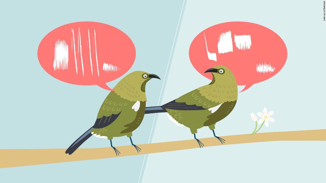 Burung tidak semuanya menyanyikan lagu yang sama. Mereka memiliki dialek juga
