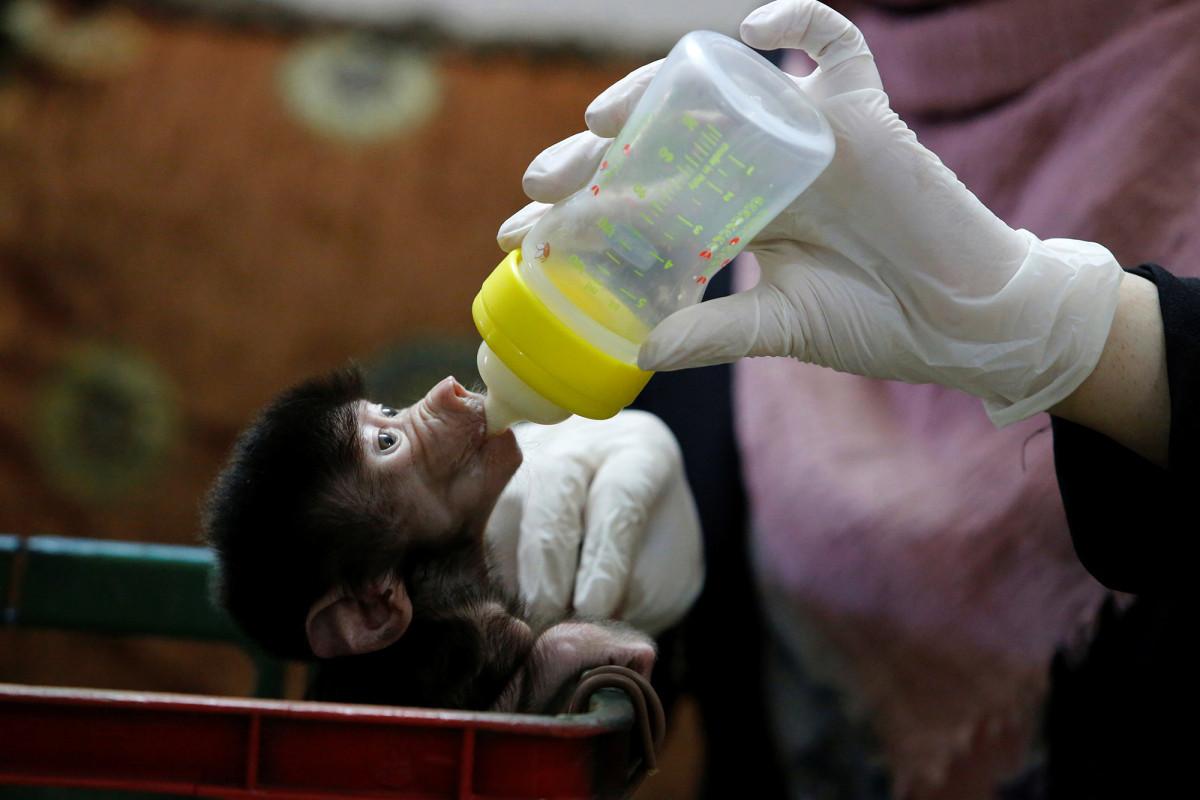 Kebun binatang mengalami ledakan bayi di tengah kuncian coronavirus