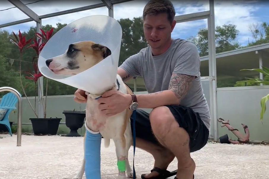 Pria Florida bertarung melawan buaya yang menyerang anjingnya