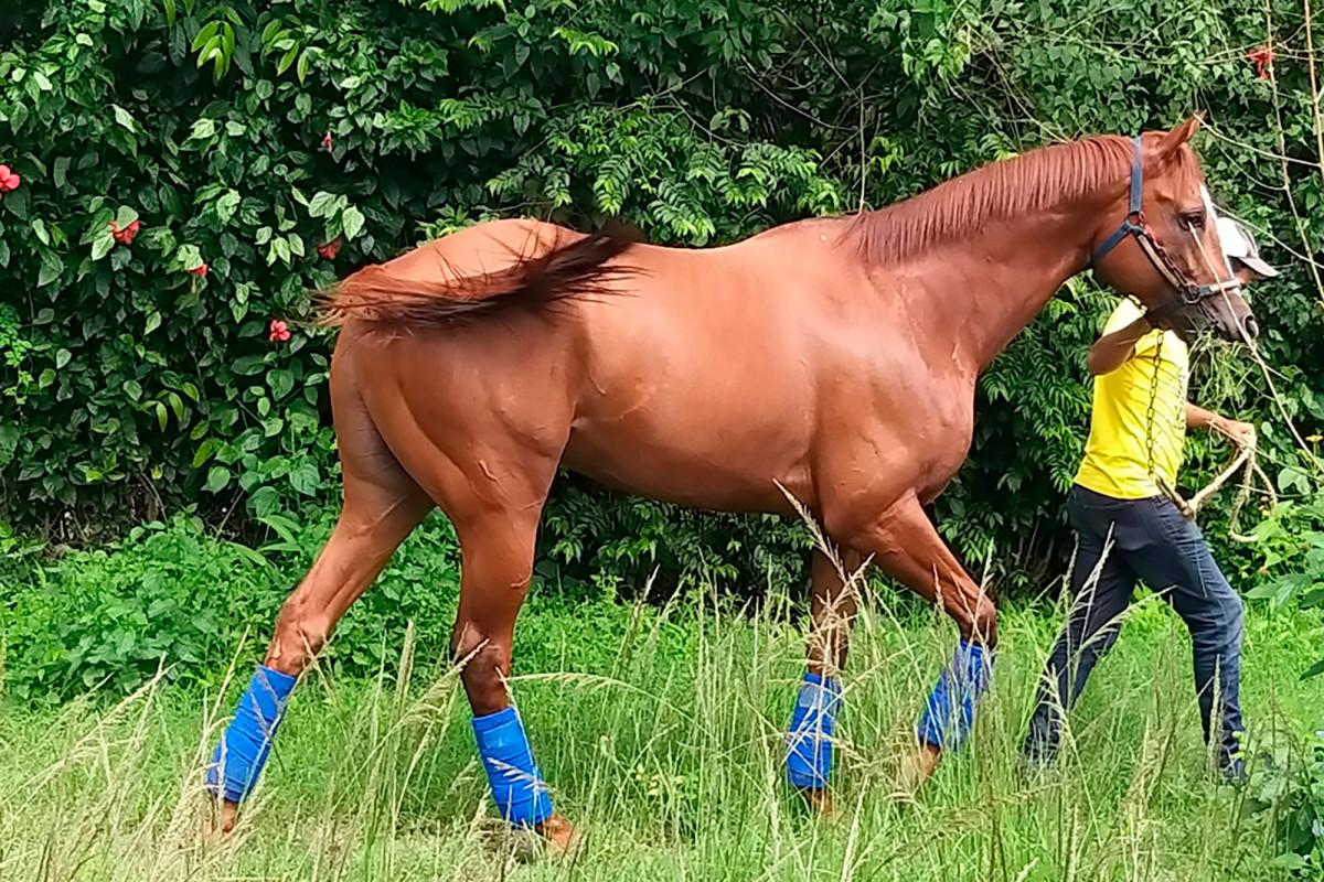 Rakyat Venezuela marah dengan pembantaian kuda pacuan tercinta demi makanan