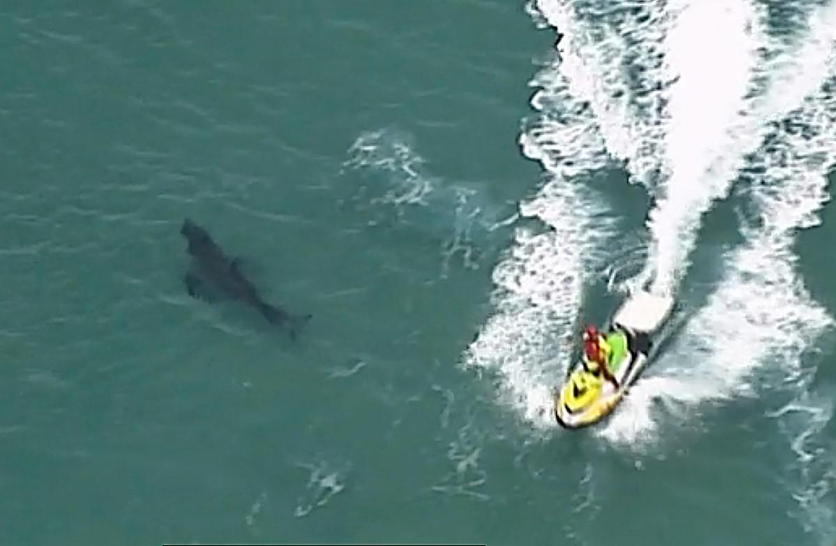 Surfer terbunuh oleh hiu putih besar setinggi 10 kaki di Australia