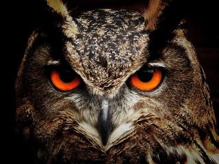 Wow! Ilmuwan Temukan Fosil Burung Hantu Berusia 60 Juta Tahun